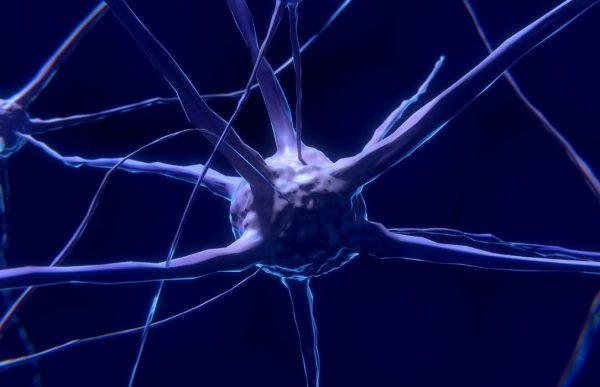 ludzki autonomiczny układ nerwowy